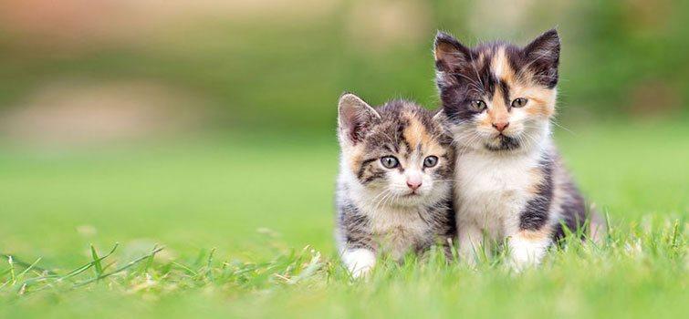 Veterinary FAQs | Creature Comforts Veterinary Service